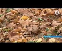 Рейды против поджигателей листвы продолжаются