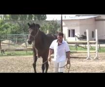 Экстерьер конного взвода