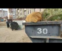 Горят пластиковые мусорные баки